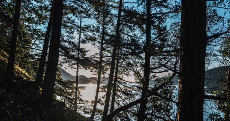Advancing urgently needed tree protection policy in the Islands Trust