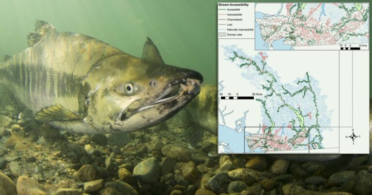 Quantifying lost habitat for Pacific salmon in the Lower Fraser