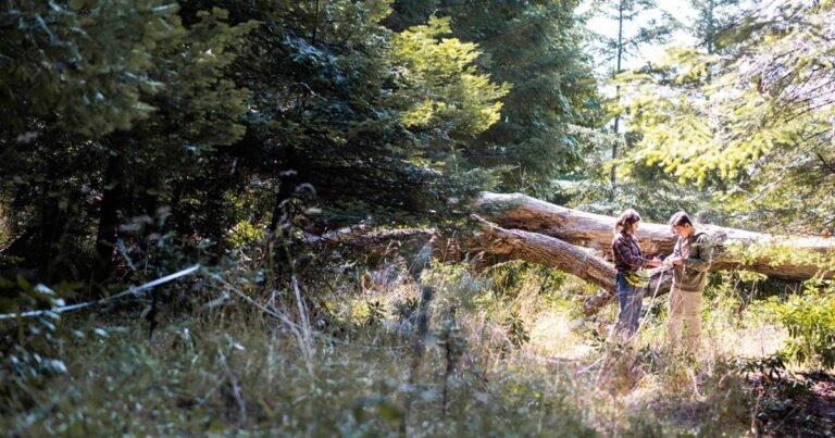 Ethics of Making the Location of Big Trees Accessible to the Public