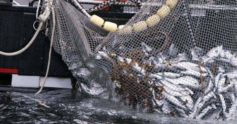 Have DFO fishery managers gone rogue?